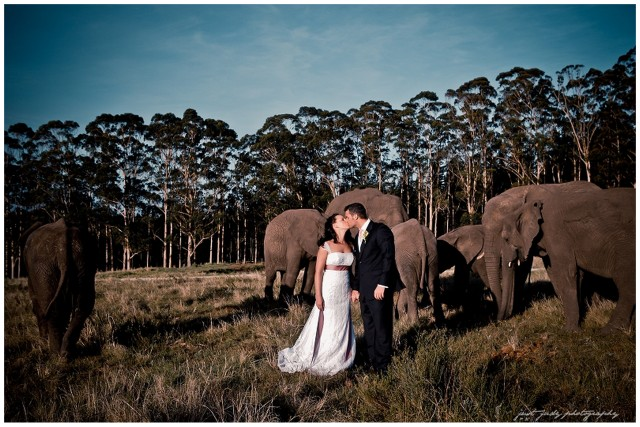 Real Wedding at Knysna Elephant Park {Caroline & Keith} | SouthBound Bride